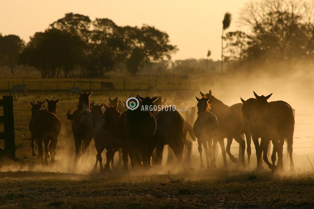 Cavalos em fazenda no Pantanal brasileiro. Corumba, Mato Grosso do Sul / Horses at a ranch in brazilian Pantanal. Corumba town. Mato Grosso do Sul state.