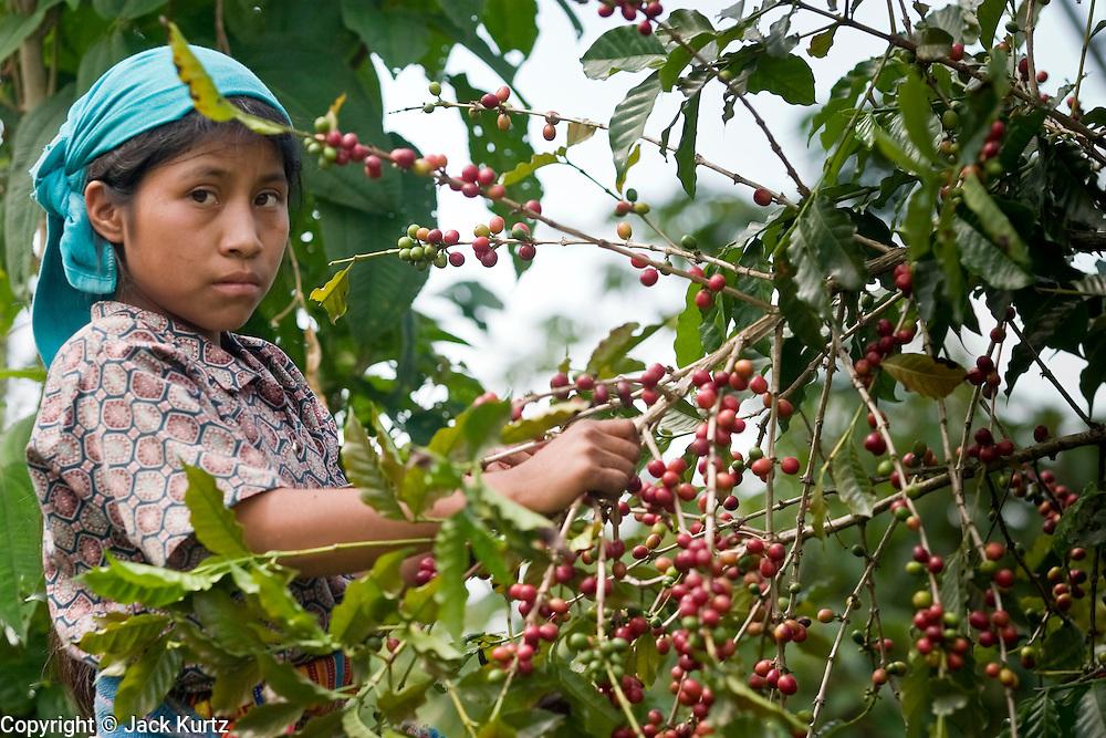 چه شد که قهوه به نوشیدنی پرطرفدار در جهان تبدیل شد؟