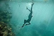 Spear fishing -Teenage Ni Vanuatu boy diving for fish. Uleveo, Maskelyne Island, Malampa Province, Malekula, Vanuatu
