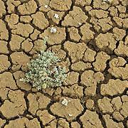 cracked mud, Colorado