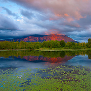 Storm clouds move in at sunset, obscuring the summit of Mount Si, a 4167 ft (1270 m) mountain located in North Bend, Washington. The mountain and storm clouds are reflected in Borst Lake, which is lined by water lilies in early summer.