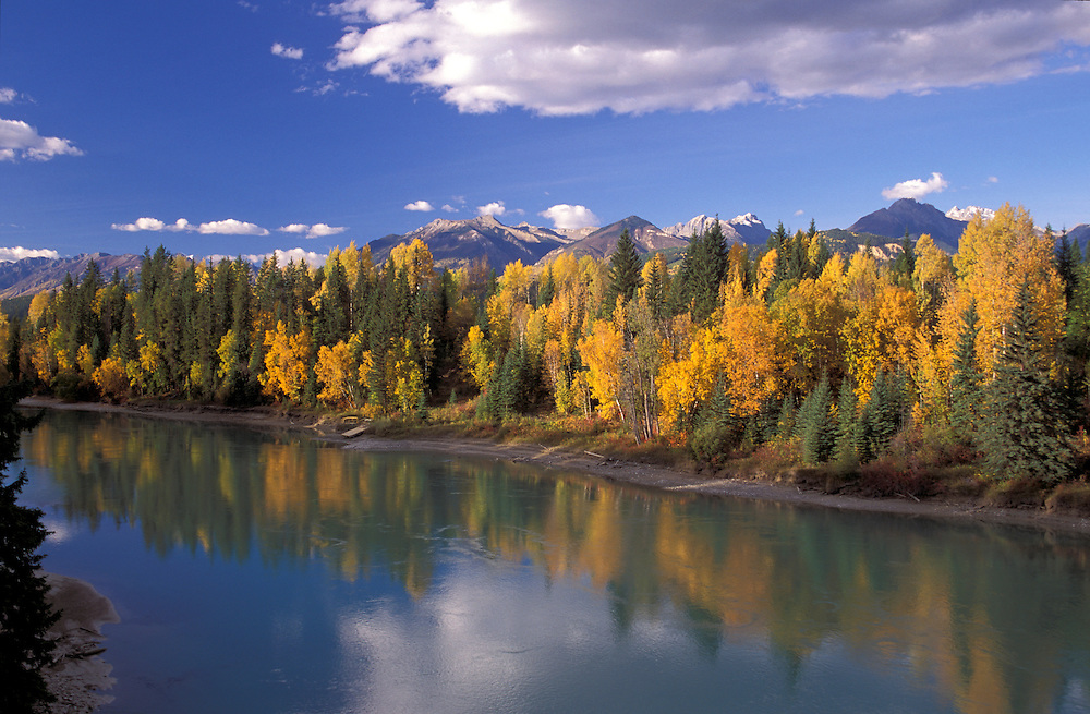 Fall Colors along Columbia River near Golden, British Columbia, Canada