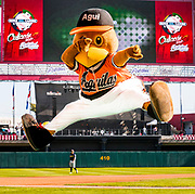 CULIACAN, MEXICO - FEBRUARY 2, 2017: Agui, the mascot from Aguilas del Zulia, the team representing Venezuela, entertains the crowd on the field during the Caribbean Series game between Venezuela and Puerto Rico at Estadio de los Tomateros on February 2, 2017 in Culiacan, Rosales. (Photo by Jean Fruth)