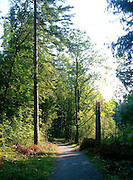 Austrian forest in Vorarlberg county