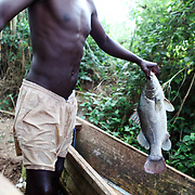 A fisherman holds up a Nile perch caught in Lake Victoria -- one of the only from their catch that day that met the regulated minimum weight.  It's getting harder and harder to find fish that meet the minimum, so local fishermen are keeping whatever they fish, large enough or not. Here in Ggaba, a small town in southern Uganda that almost entirely subsists on the fishing industry, the locals have contributed to the dangerous overfishing of the lake despite strict regulations from Tanzania, Uganda, and Kenya.