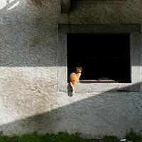 While walking to a meeting in Chamonix, I came across this cat in the window. The shadow lines brought it all together.