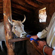 Burhan Yazici, co-owner of Beritan Veterinary Clinic, makes a house call.
