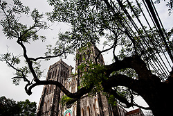 Facade of St Jospeh's Cathedral seen through a tree's canopy, Hanoi, Vietnam, Southeast Asia