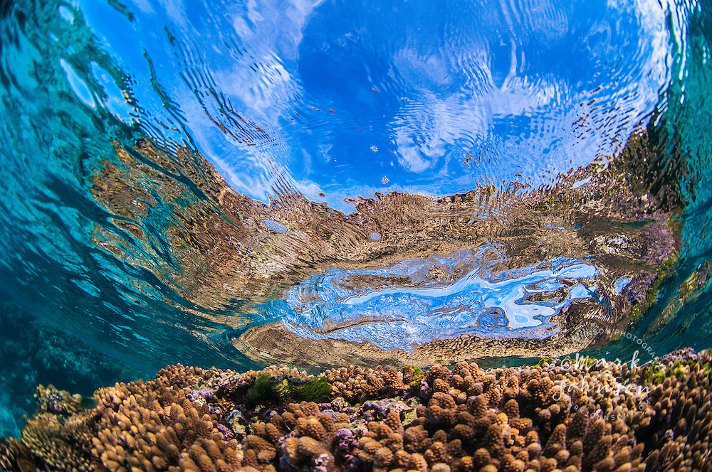 Underwater of a wave breaking over a coral reef, Lady Elliot Island, Great Barrier Reef, Queensland, Australia