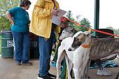 Greyhound Rescue Community