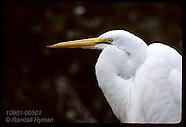 05: SEABIRD RESCUE BIRDS