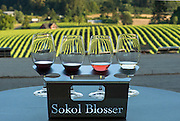 Sokol Blosser tasting flight on patio overlooking vineyard, Dundee Hills, Willamette Valley, Oregon