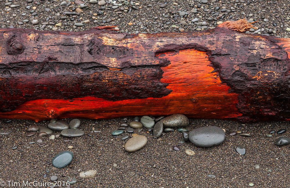 Rialto Beach Detail. Washington Coast.