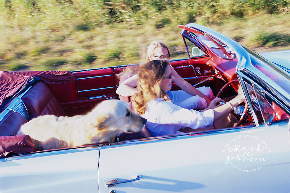 Friends Riding with Dog in Convertible --- Image by © Mark A. Johnson/CORBIS