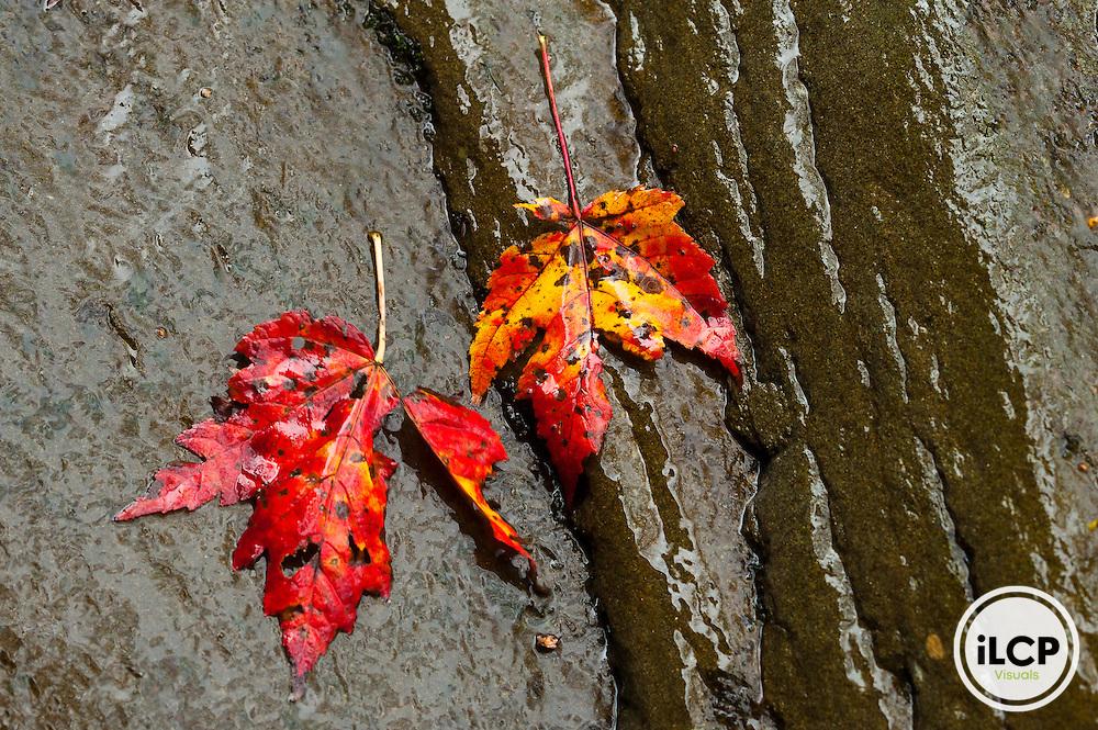 Catskill Forest, Neversink Gorge, Delaware County, New York.