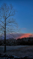 Backyard tree at sunset. Winter Nature in New Jersey. Image taken with a Leica T camera and 18-56 mm lens (ISO 100, 18 mm, f/3.5, 1/200 sec)