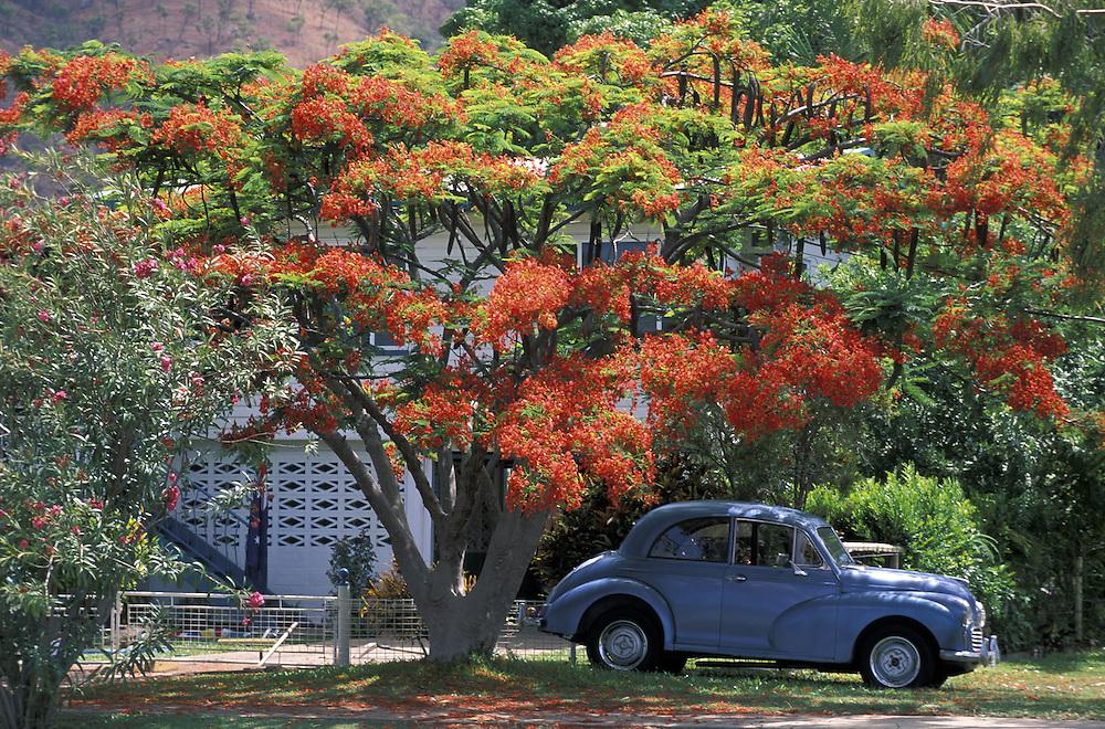 Classic Car & Poinciana Tree.Townsville.Queensland.Australia