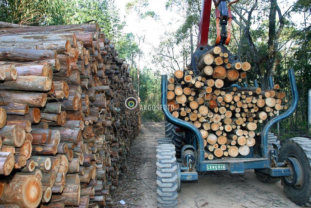 Corte e transporte mecanicos de madeira de eucaliptos para industria extrativa vegetal. / Cut and transportation mechanical of wood of eucalyptus for industry extracting..Foto © Fabio Salles/Argosfoto