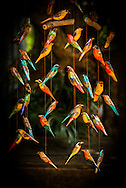 This carved wood and painted mobile of local birds was carved and painted by workers at the Kiambethu Tea Farm outside Nairobi, Kenya.<br /> LIMITED EDITION PRINT