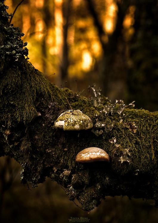 Fungi. Nature captured at Lauvås, Norway.