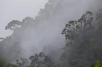 Lush tropical rainforest in  Sinharaja Forest Reserve, Sri Lanka