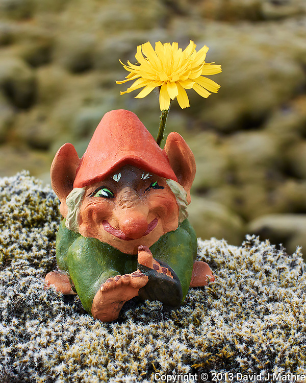 Troll Sunning Itself Under A Dandelion On the Lichen and Moss Covered Eldhraun Lava Field in Southern Iceland. Image taken with a Nikon 1 V2 camera and 32 mm f/1.2 lens (ISO 160, 32 mm, f/8, 1/250 sec). Nikonians Photo Adventure Tour in Iceland with Mike Hagen and Tim Vollmer