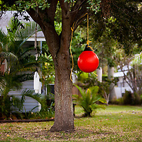 CORTEZ, FL - October 27, 2010 -- Buoys hang from tree as swings and decor in the Cortez fishing village in Manatee County, Fla., on Wednesday, October 27, 2010.  The tiny fishing village dates back to the 1880's and is the Gulf Coast's last working fishing village, as well as a speak-easy destination for artists, visitors and old-timers.  (Chip Litherland for SARASOTA Magazine)