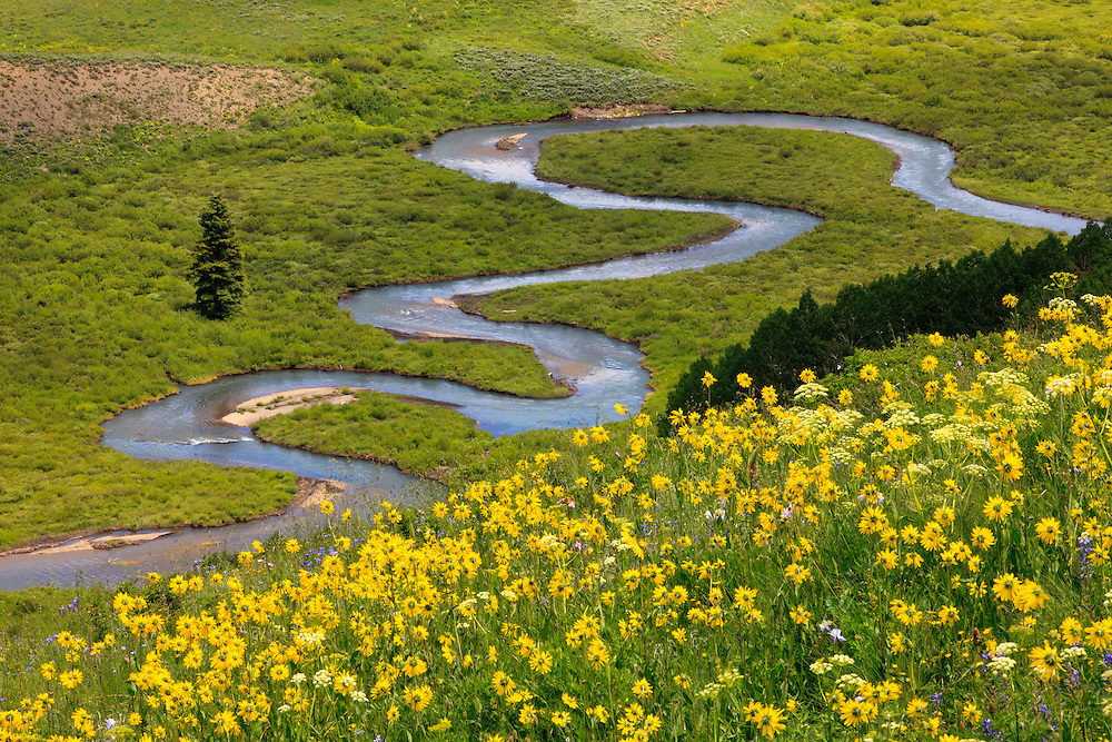 Looking down on a field of wildflowers above the East River between Gothic and Crested Butte, Colorado.