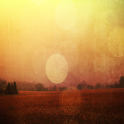 Misty winter evening with light rain falling on the fields.Textured and coloured photography.