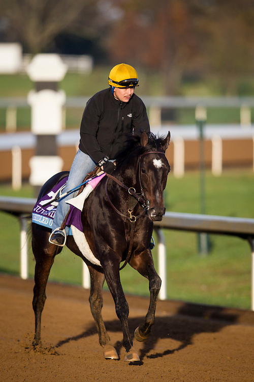 October 29, 2015:   Unbridled Outlaw, trained by Dale L. Romans and owned by Albaugh Family Stables, exercises in preparation for the Sentient Jet Breeders' Cup Juvenile at Keeneland Race Track in Lexington, Kentucky. Alex Evers/ESW/CSM