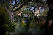 Families ride through the Safari Trek in the new theme park Legoland in Whitehaven, Florida on February 11, 2012.