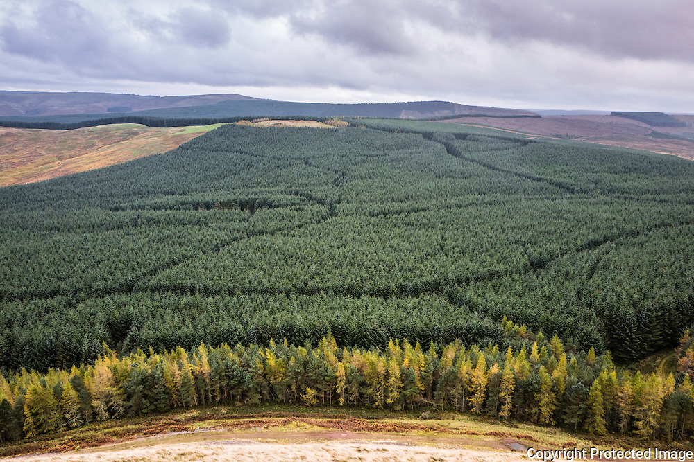 Camptown, Jedburgh, Scottish Borders, UK. 27th October 2016.  Looking south from Phillip Law (422m) at autumn colours on the outskirts of Leithope Forest. The Anglo Scot Border is on the skyline and the area is famous for the Raid of Redeswire, a skirmish between the English and Scots in 1575.