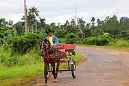 Horse and cart in La Palma, Pinar del Rio, Cuba.
