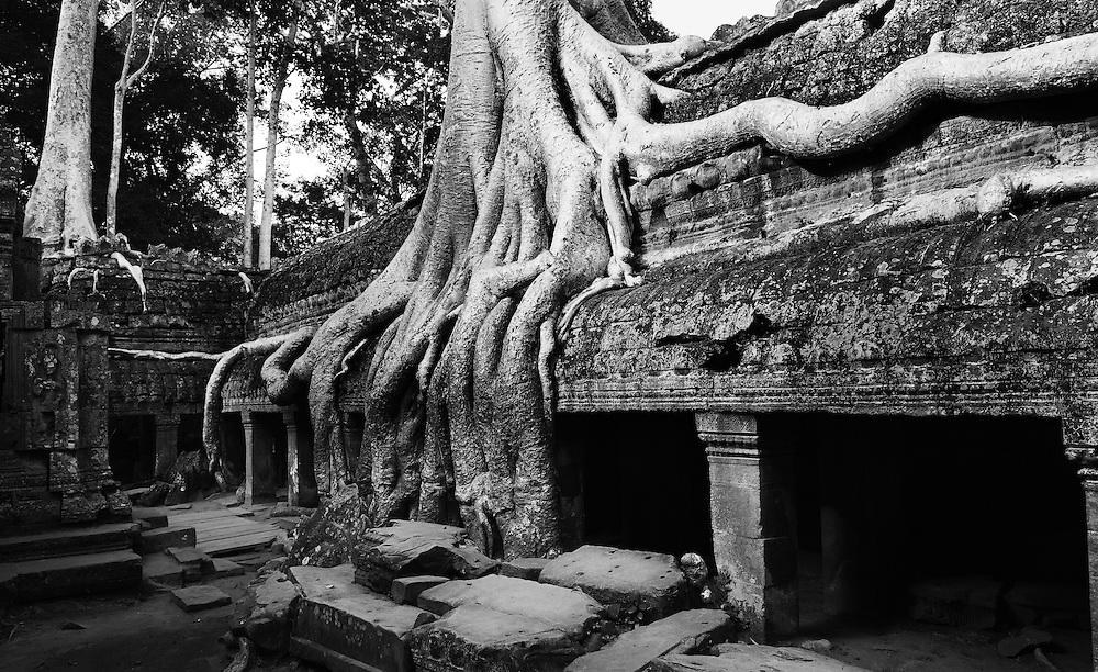 Ta Prohm - Siem Reap, Cambodia.