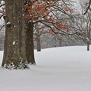 &quot;As the Snow Falls&quot;<br />