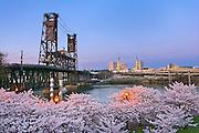 Cherry blossoms, Portland Waterfront, Portland, Oregon.