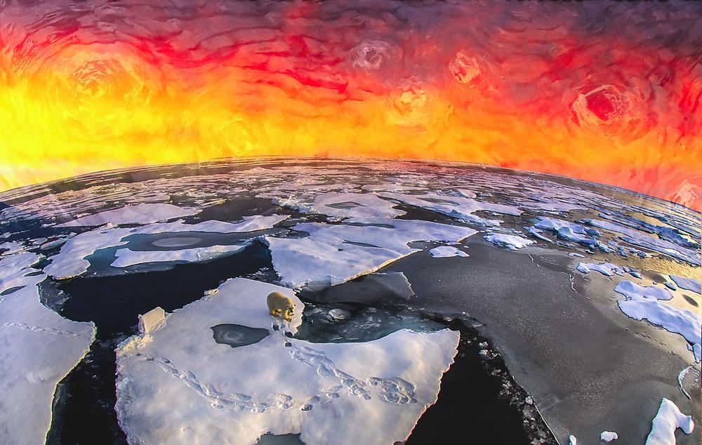 Polar Bear on melting ice, Svalbard. Van Gogh Edition