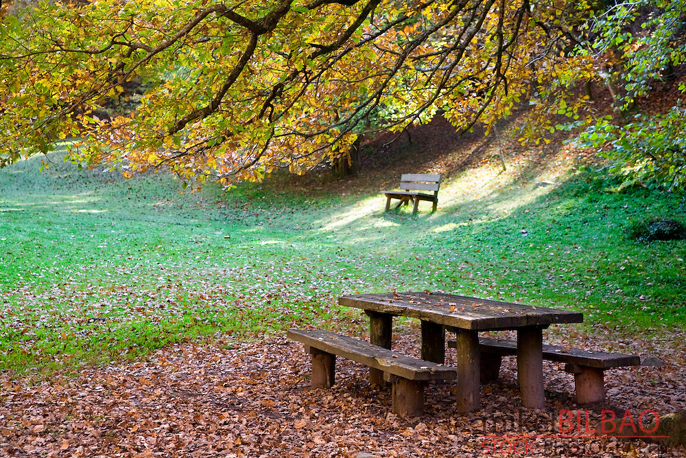 picnic area on a beechwood forest in autumn.