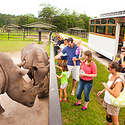White Oak tour participants get the opportunity to touch white rhinos which weigh over two-tons. White Oak Conservation is a 600-acre wildlife research and training facility in Yulee, Florida. Their mission is to conserve species through innovative breeding, conservation and education programs.