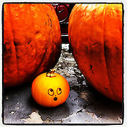 Intimidated Pumpkin, New Orleans
