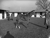 1959 - Goffs November Bloodstock Sales at Ballsbridge