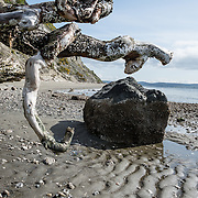 Driftwood branches appear to pinch a rock, on a wavy pattern of tidal sand. Double Bluff State Park (Useless Bay Tidelands), Whidbey Island, Washington, USA. While the tidelands are a State Park, the upland portion is Double Bluff Park, operated by the Friends of Double Bluff and Island County, including an off-leash dog park.