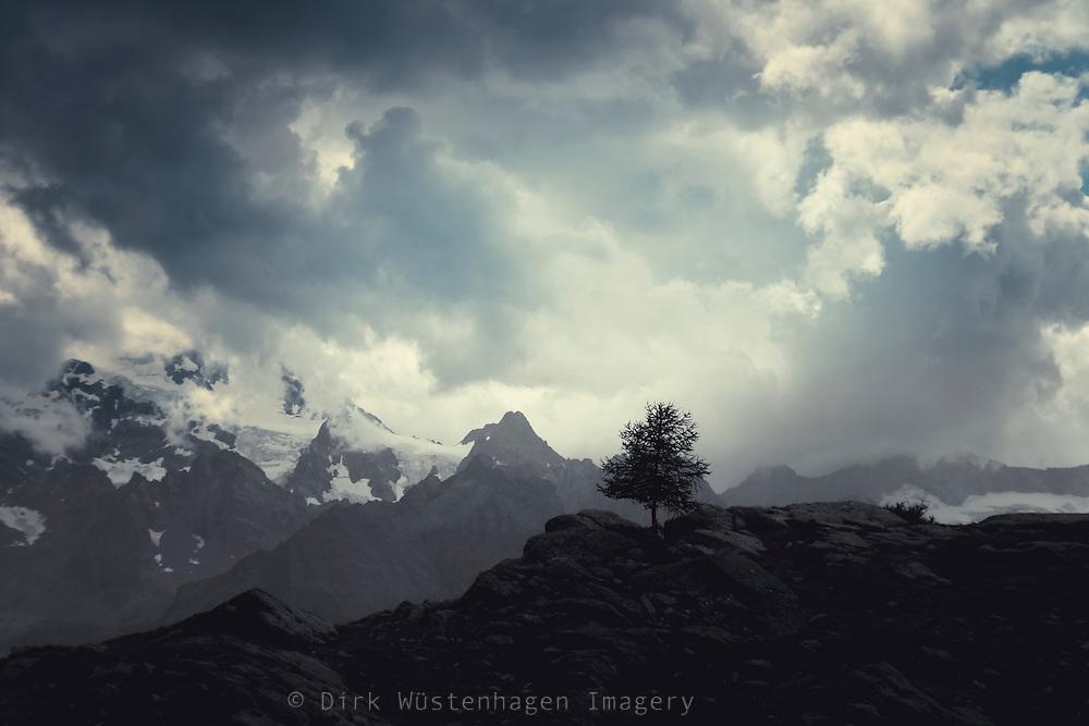 Einzelner Baum auf Anhöhe in den italienischen Alpen, Lanzada, Italien
