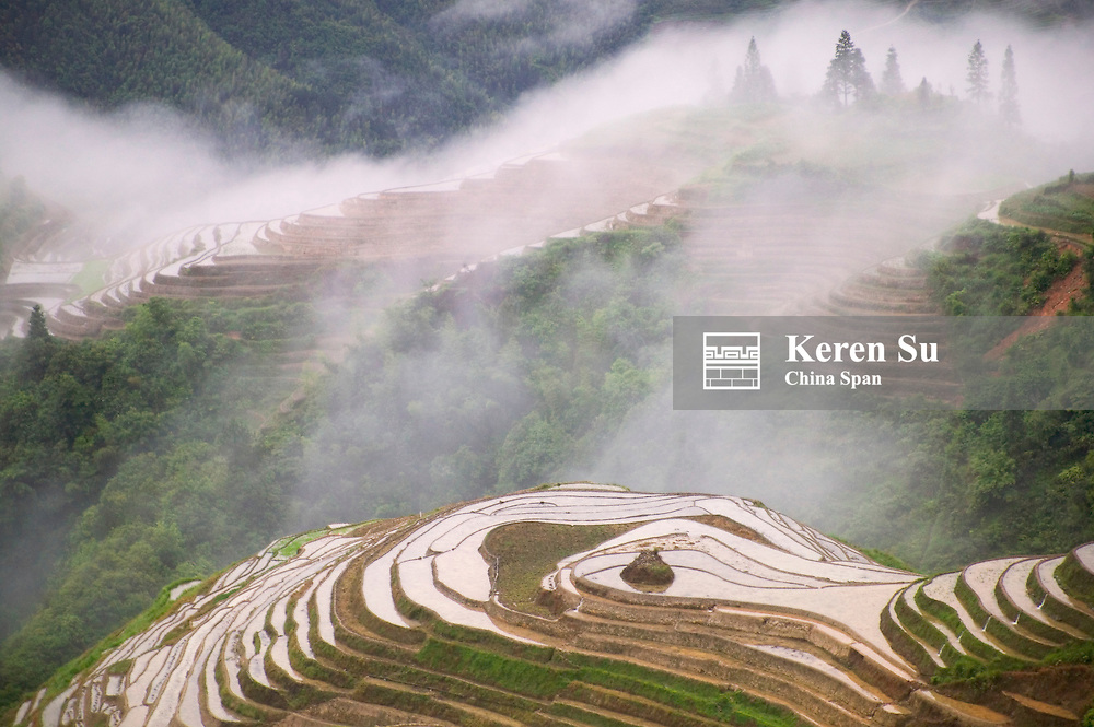 Rice terraces in early morning mist, Longsheng, Guangxi, China
