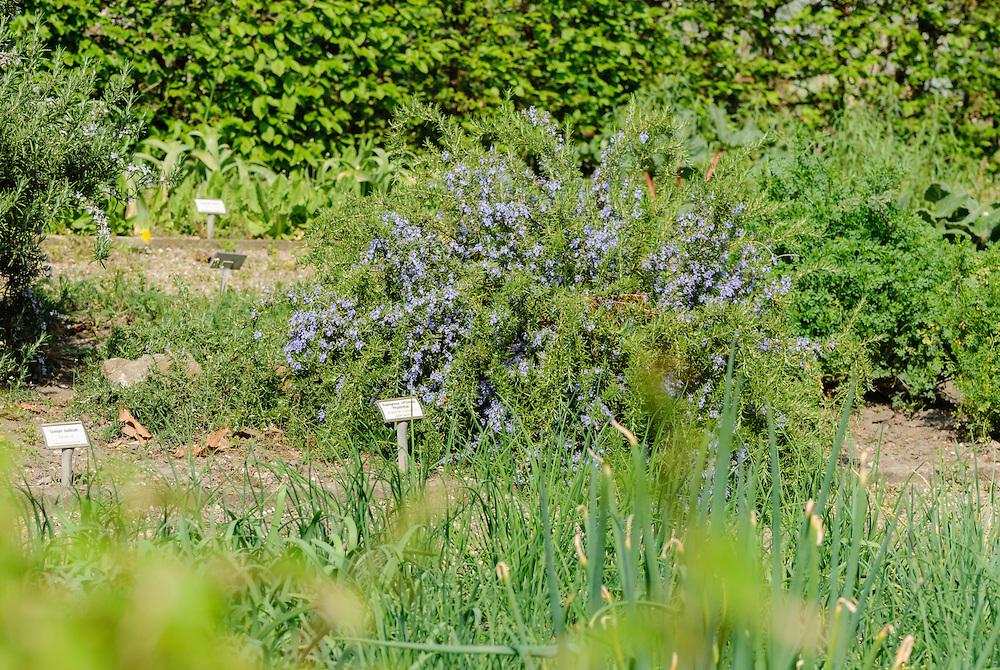 Botanische tuin Jochumhof, Steijl, Limburg, Netherlands