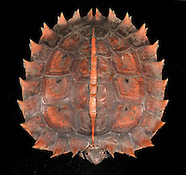 Tortises and Turtles