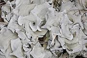 Lichen swirls near the Interoceanic Highway in the Peruvian Andes