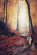 Serene forest scenery at sunrise in autumn