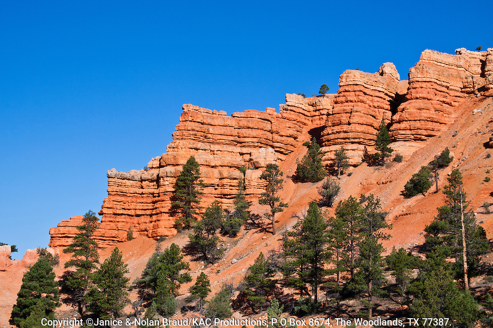 Red Rock Canyon on scenic highway 12 in Dixie National Forest in Utah. This canyon is just a few miles from the entrance to Bryce Canyon National Park, and so is often ignored or bypassed on the way to the better known tourist attraction. However, this canyon displays some of the reddest rock anywhere in Utah, with amazing formations though on a smaller scale. As part of a national forest, it is an interesting and photogenic place to hike and enjoy Utah's wonders.