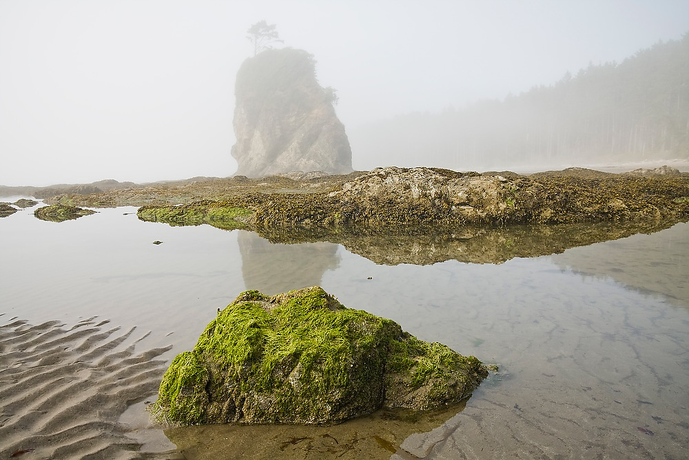 Sea stack in fog at Norwegian Memorial, North Coast, Olympic National Park, Washington.